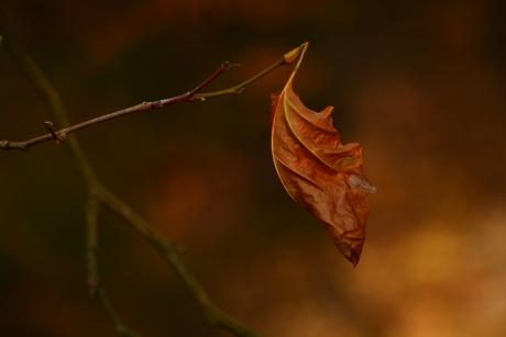 laatste herfst...