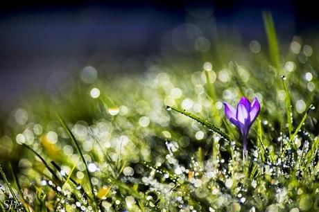 Spring Crystals