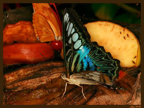 Stil vlinderleven.