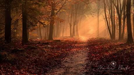 Het sprookjesbos
