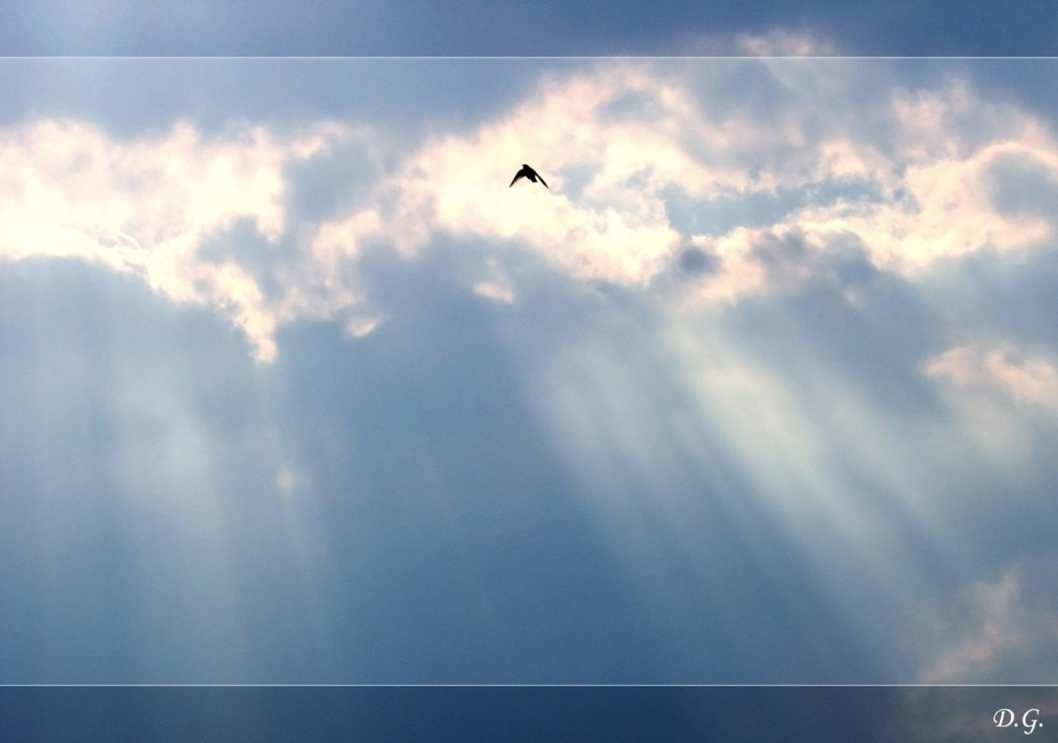 High Above - Het ging mij hier niet direct om de zwaluw (even de grote versie bekijken) Maar meer om de foto in zijn geheel. - foto door daniel44 op 06-01-2006 - deze foto bevat: lucht, zon, hoog, zwaluw, stralen, daniel44