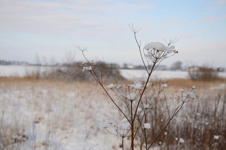 Winters skelet