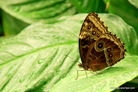 Butterfly-2-