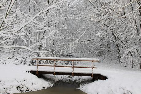 Winter December 2010