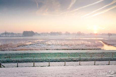 Cold Morning Glory II