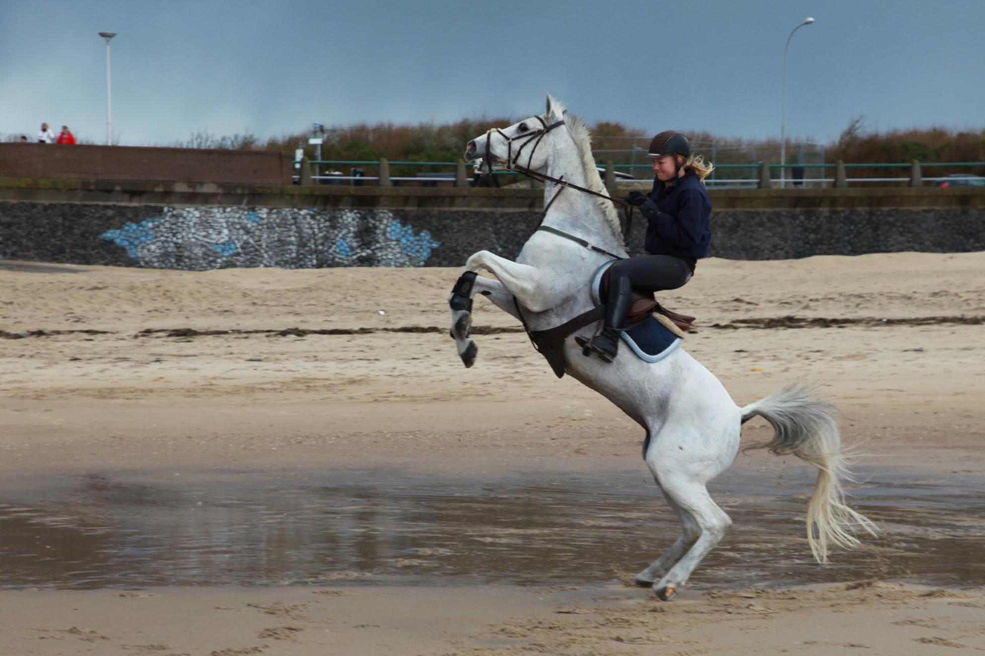 Even blijven zitten!! - Zomaar een keer een aktie foto. Foto's van paarden neem ik vaak, meestal op aanvraag, maar plaats ze bijna nooit op Zoom. Gisteren tussen de hagelbui - foto door cibjen op 11-11-2013