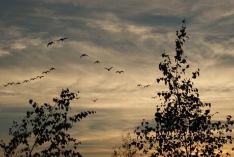 vogel vlucht bij avond