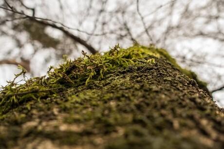 Mos op een boom