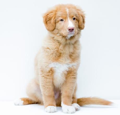 Murphy 15 weken oud
