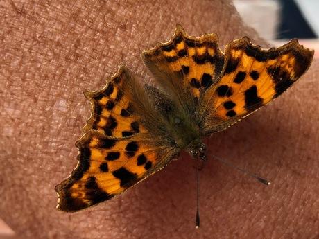 Vlinder op huid