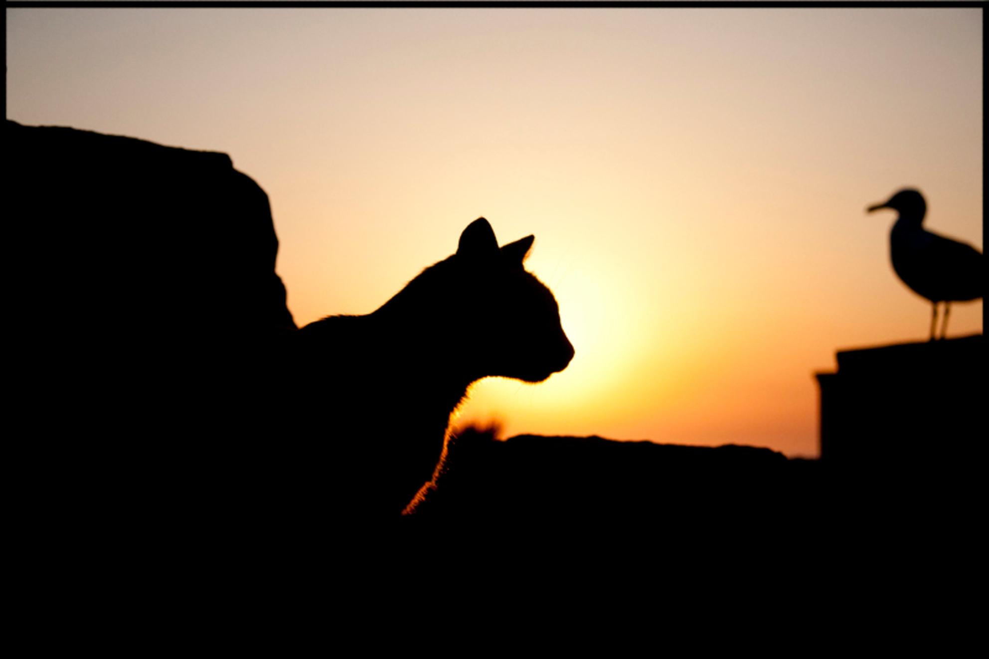 Sunset #1 - Geschoten in Mallorca op kaap formentor - foto door nobelen-design op 03-08-2011 - deze foto bevat: zon, zonsondergang, zeemeeuw, kat - Deze foto mag gebruikt worden in een Zoom.nl publicatie