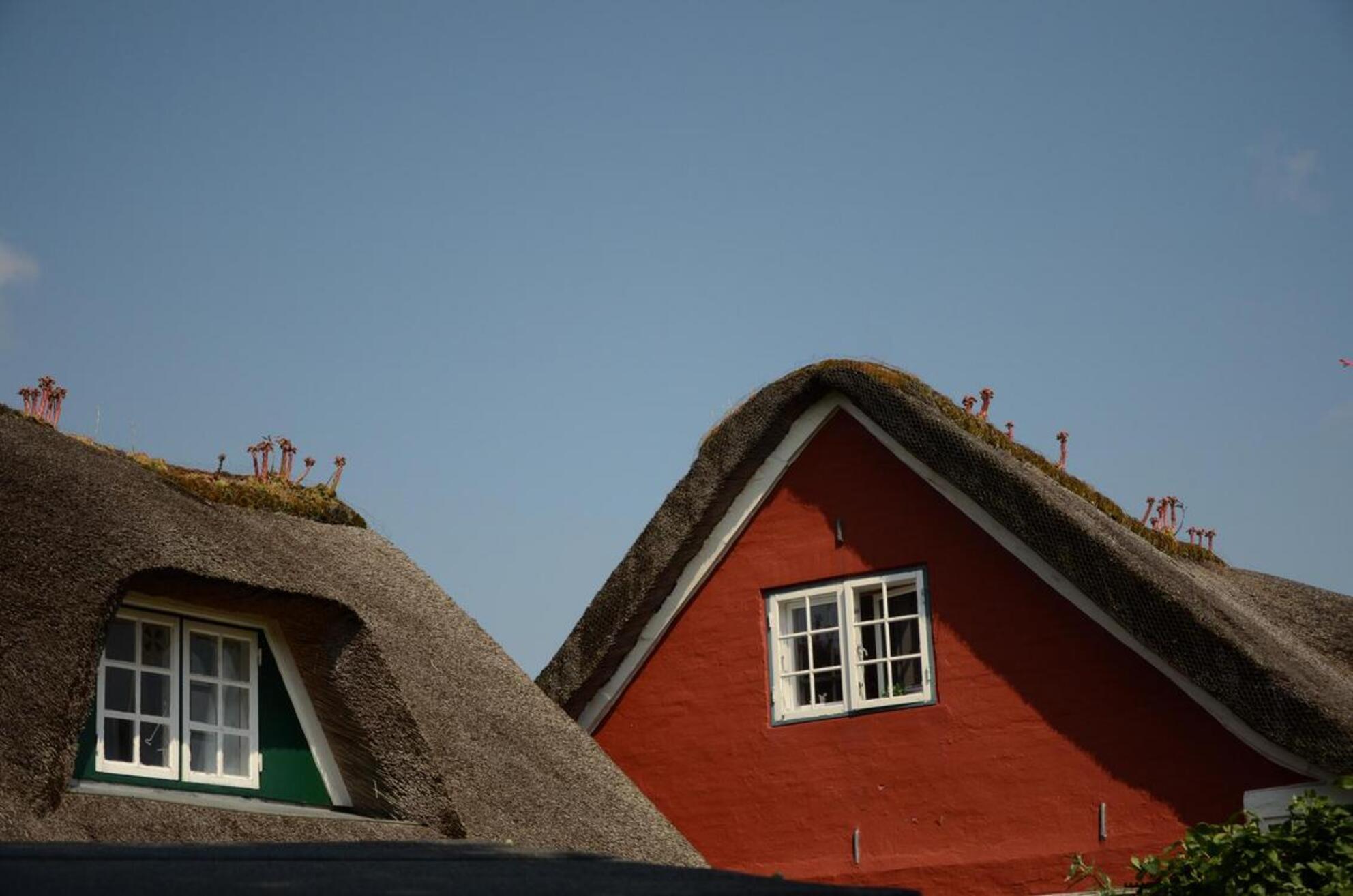 Groente? - Op Fano wil er nog wel eens een vreemde groente op de nok van het dak groeien. - foto door Henk1946 op 23-07-2011 - deze foto bevat: plantje, dak, groente - Deze foto mag gebruikt worden in een Zoom.nl publicatie