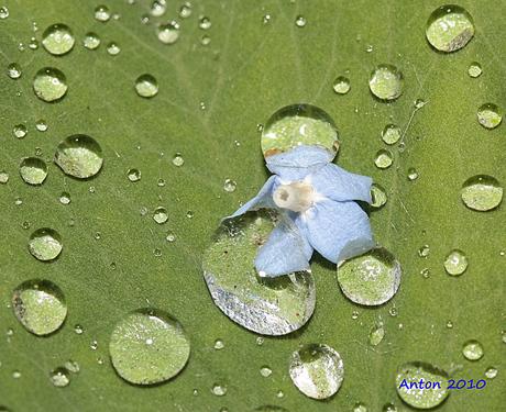 Klem in waterdruppels