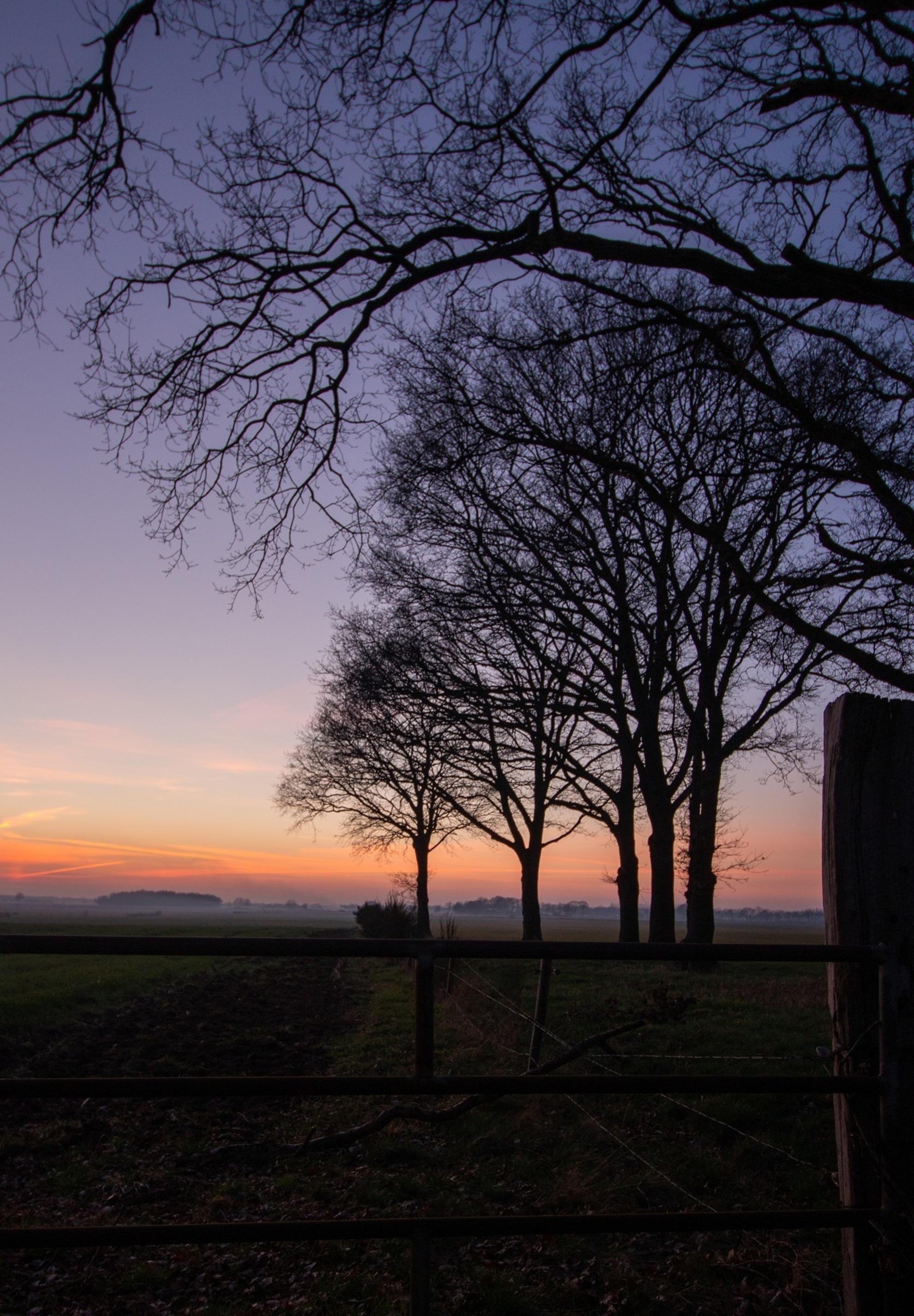 Avond in Drenthe - Na de zonsondergang was er deze avond nog veel kleur te zien in de lucht - foto door manon-3 op 03-03-2021 - deze foto bevat: lucht, hek, avond, zonsondergang, landschap, bomen, kleurrijk, avondfotografie