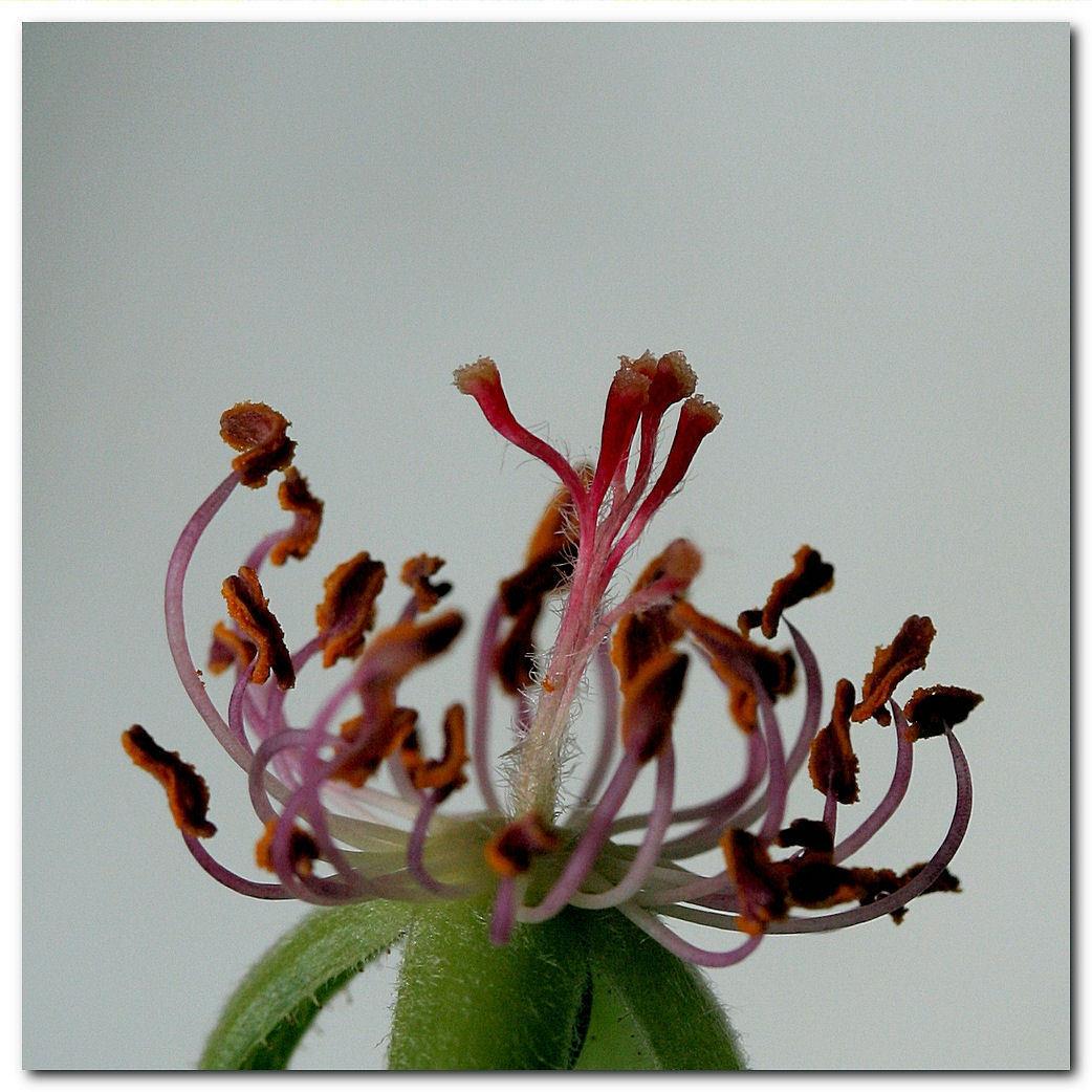 Afgevallen - De blaadjes zijn van mijn rozenzaailing afgevallen. Nu is het wachten op het vervolg: het plantje gaat nog groeien en naar ik hoop nieuwe loten maken - foto door MarnixBakker op 27-04-2010 - deze foto bevat: bloem, roos, stekel, zaailing