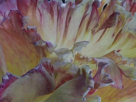 Fragment van een tulp