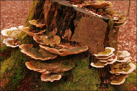 Servies Kast - Deze stam met schotels kwam ik tegen in het bos bij Gieten Deed me denken aan kast met schotels - foto door Teunis Haveman op 23-03-2021 - deze foto bevat: boom, natuur, paddestoel, bos, schotelzwam