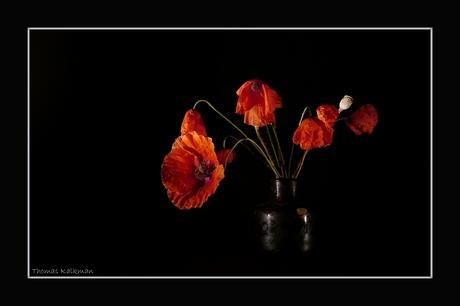 Summer flowers II