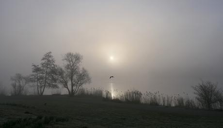 Mist in het Haarlemmermeerse Bos