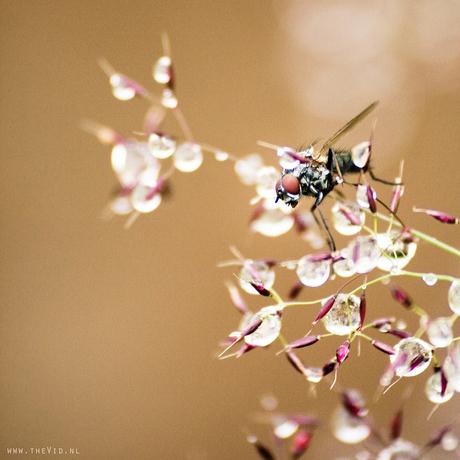 summerfly.