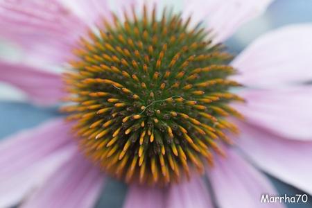 bloem - - - foto door Marrha op 30-11-2016 - deze foto bevat: bloem, tuin