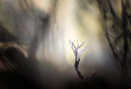 Frightening forest