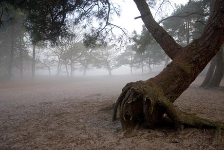 Duinen in de mist 2