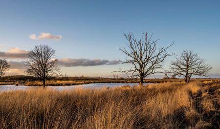 Bargerveen - - - foto door NataschaRenata op 08-03-2021 - deze foto bevat: lucht, lente, natuur, licht, nederland