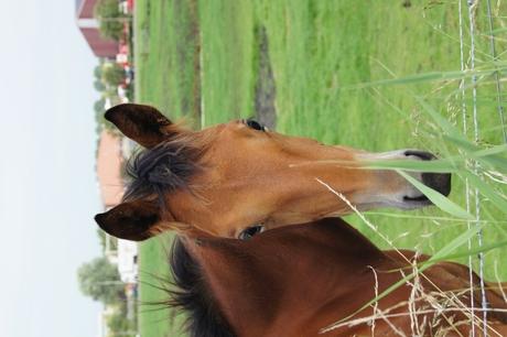 jong paard in de wei