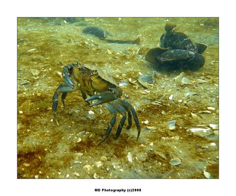 Zeeland onderwater (1)