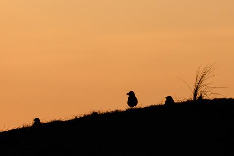 Silhouet op Texel