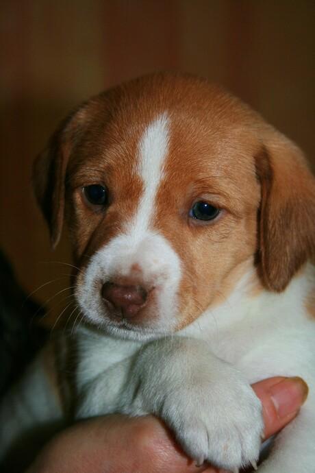 Pups 1