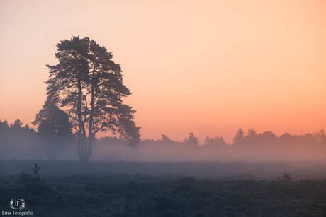 Mysterie Drents Friese Wold