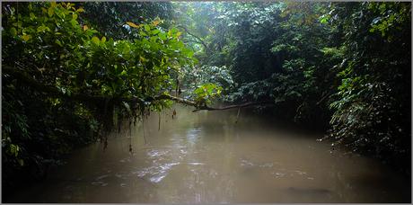 Junglescape