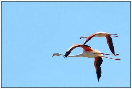flamingoflight