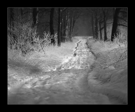 Spoor in de sneeuw - Ik heb wat zitten twijfelen over deze foto. Had ik het scherpteverloop anders moeten doen? Ik heb gekozen voor scherpte in het midden..... Groet, Ju - foto door juriheise op 18-01-2010 - deze foto bevat: sneeuw, oisterwijk, sppor