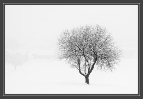 Zomaar een boom