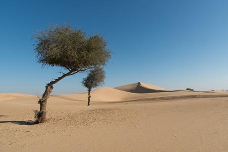 Al Khatim duinen Abu Dhabi