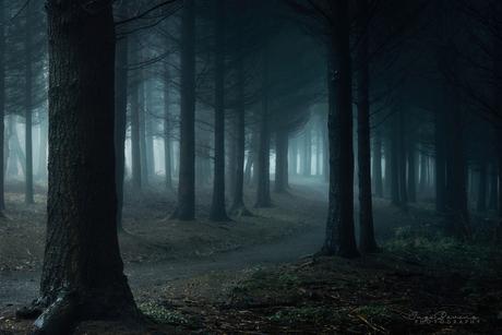 Forbidden Forest.