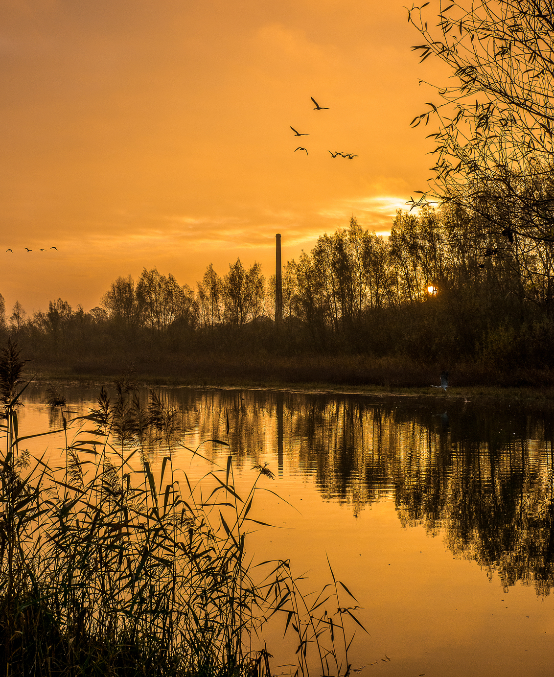 Najaar in de Uiterwaarden - In de uiterwaarden van Wageningen - foto door lotjenr1 op 27-02-2021