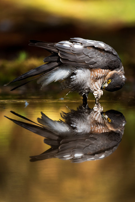 Taking a bath...