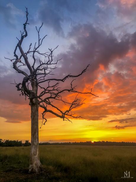 Dode boom bij zonsondergang
