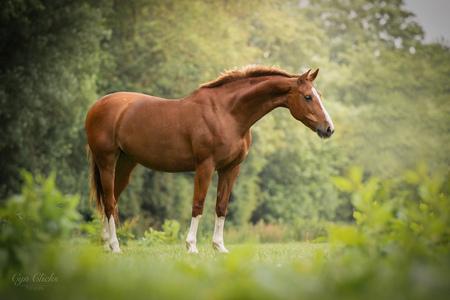 The Gracefull Lady Dollywood - - - foto door iCyn op 12-06-2020 - deze foto bevat: natuur, paard, kwpn, natuurlijk licht