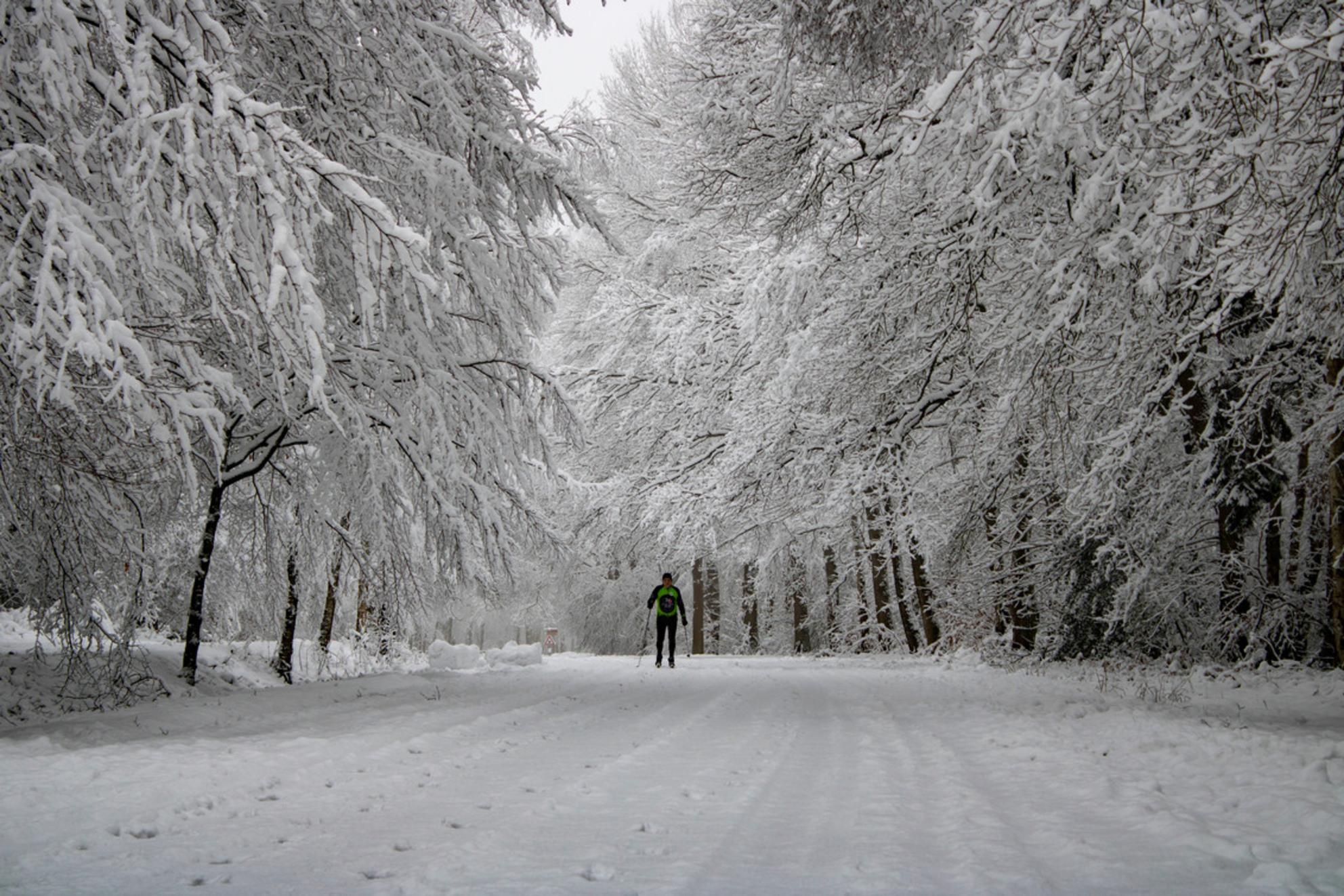 Winters Plaatje - Op 25-1-2021 was ik al heel vroeg in het Vijlenerbos om de sneeuw te fotograferen. En ineens zag ik deze meneer door mijn lens die aan het langlaufen - foto door Carla34 op 27-01-2021 - deze foto bevat: boom, natuur, sneeuw, winter, landschap, bos, nederland, vijlen, vijlenerbos, langlaufen, zuid-limburg, vroege ochtend, winter wonderland - Deze foto mag gebruikt worden in een Zoom.nl publicatie