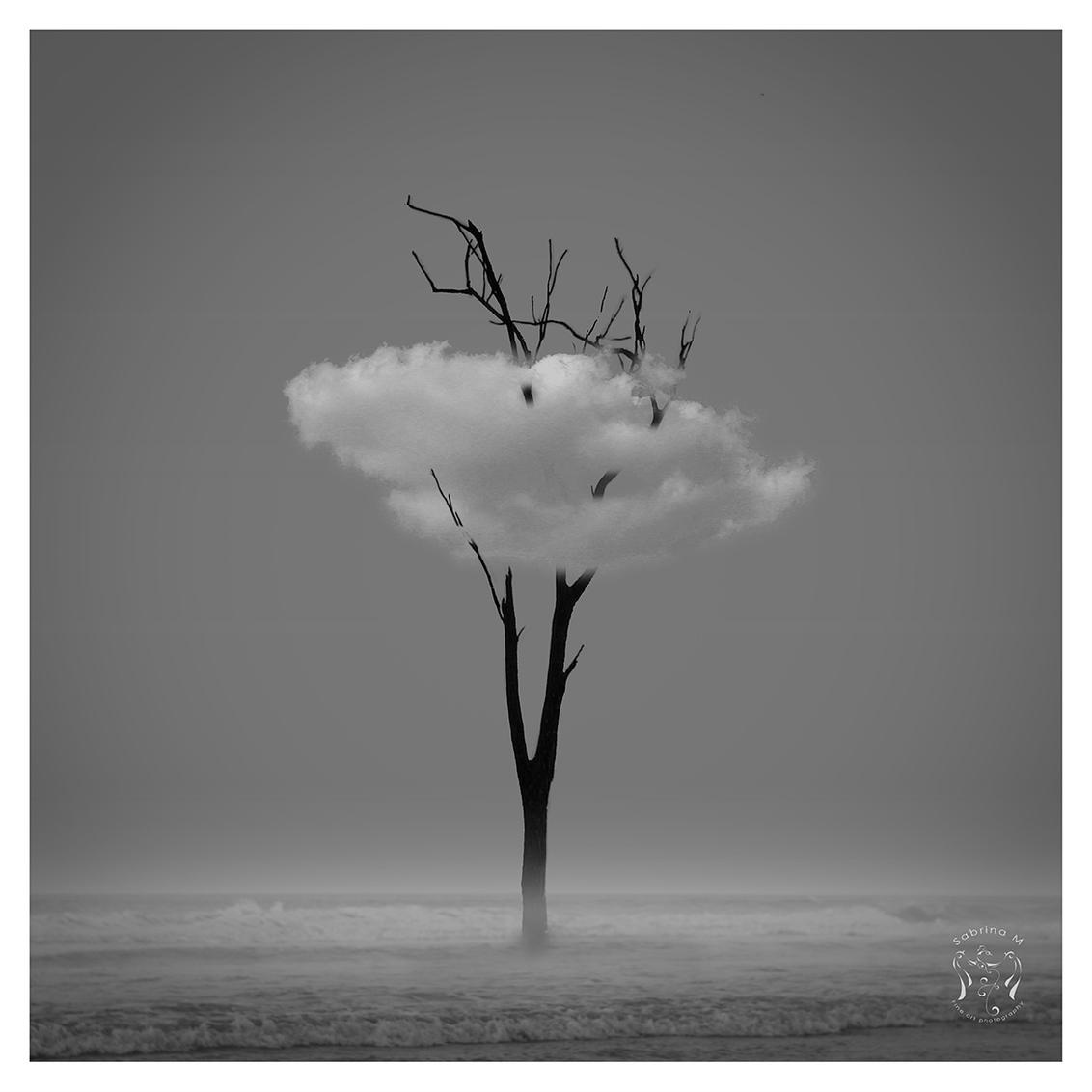 With my head in the cloud - Eentje gemaakt ivm een opdracht 'creëer iets zonder persoon' - foto door sabbe op 28-03-2016 - deze foto bevat: strand, bomen, zand, kust