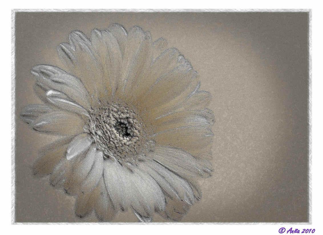 witte gerbera - bewerking - een bewerking van een vrij simpele foto van een witte gerbera voor mijn keukenkastdeurtje. beetje met allerlei effecten gespeeld. - foto door spitsoor op 15-06-2010 - deze foto bevat: wit, bloem, gerbera, bewerking, tekening, pspx2