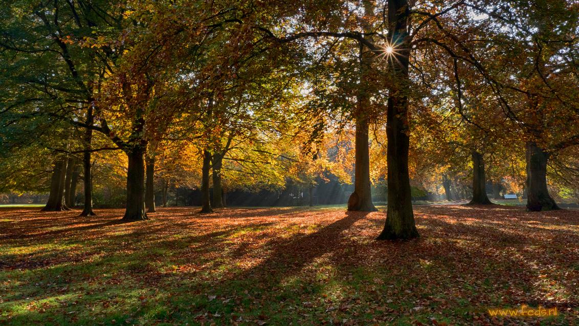 Herfst 2015 - Herfst op Landgoed Clingendael 27-10-2015 - foto door Jan Zuijderduijn op 29-10-2015