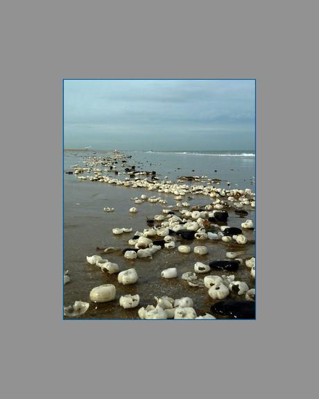 zeebonen