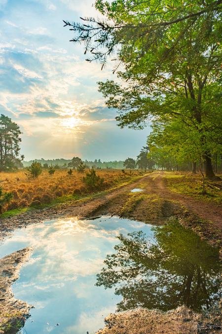 E L E M E N T S - Wandeling door een stukje Strabrechtse Heide :) Altijd wel leuk om reflectie in het water vast te leggen! - foto door Alex-Maas1 op 05-05-2020 - deze foto bevat: groen, lucht, wolken, blauw, zon, water, lente, natuur, licht, spiegeling, landschap, heide, bos, tegenlicht, zonsopkomst, bomen, nederland, hdr, waterplas, Strabrechtse heide
