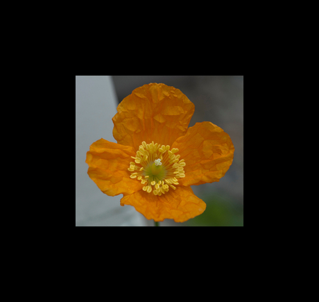 Oranjeverdriet